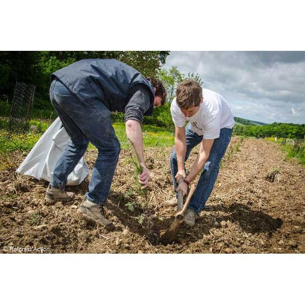 1 arbre plant avec reforest 39 action onature for Achat plante sur internet
