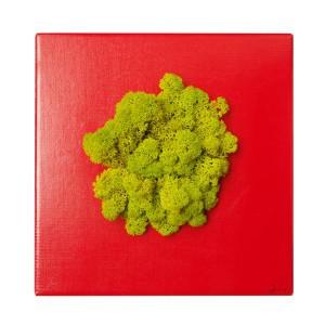 Cadre lichen stabilisé