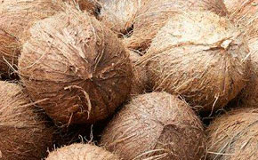 Fibre de coco bio onature