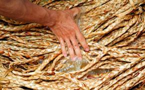 Blanchissage des tresses de jacinthe d'eau