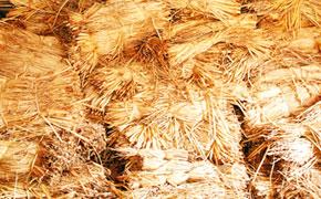Fagots de jacinthe d'eau